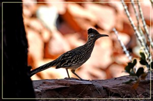 Profile of Roadrunner