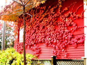 Red House Red Fall by Ansul (Canada)
