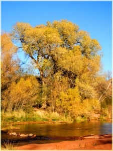 The Tree's of Oak Creek